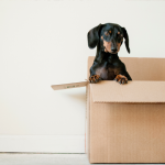 pittsley-your-move-out-checklist