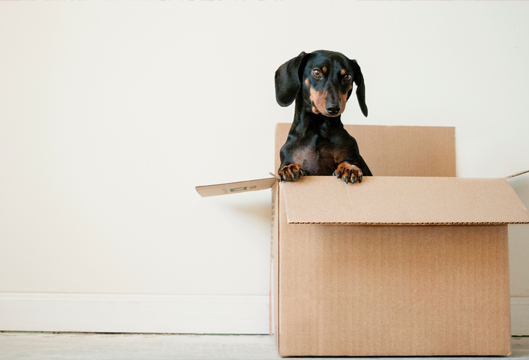 Move Out Day: Your Go To Checklist